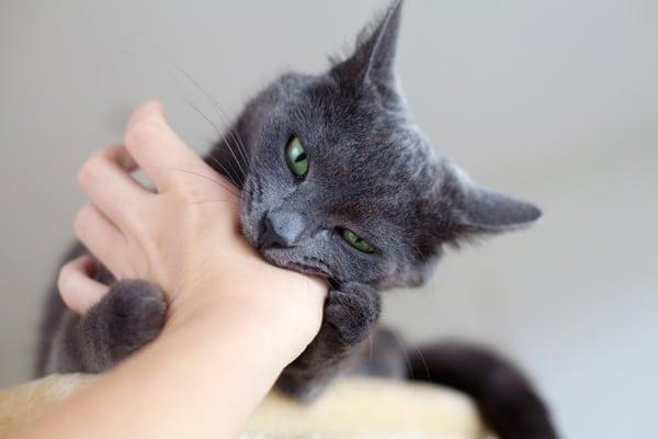 cat bites